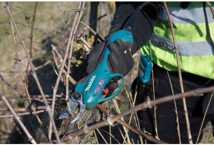 NEW MAKITA CORDLESS BACKPACK PRUNING SHEARS ARE SHARING THE LOAD AT NEW HALL VINEYARD, ESSEX