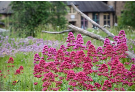 THERE'S MORE TO PLANTING GREEN ROOFS