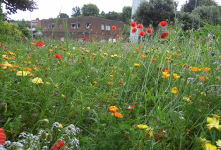 Wildflower Earth™  – A Stunning, Low Maintenance Wildflower Solution